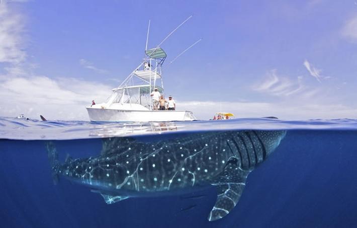 barco tiburon
