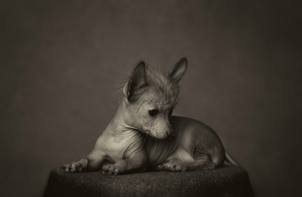 10_Animal_Portraits__vincent_Lagrange_yatzer  Vincent Lagrange expressive animals 10 Animal Portraits  vincent Lagrange yatzer