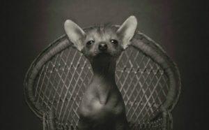 Vincent Lagrange expressive animals