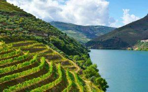 7 Luxurious and Under-the-Radar Wine Destinations