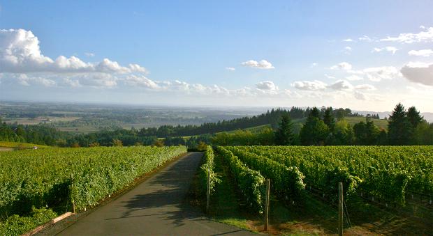 7-luxurious-and-under-the-radar-wine-destinations-8 Wine Destinations 7 Luxurious and Under-the-Radar Wine Destinations 7 Luxurious and Under the Radar Wine Destinations 8 620x339